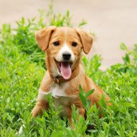 Puppy Training Bracknell